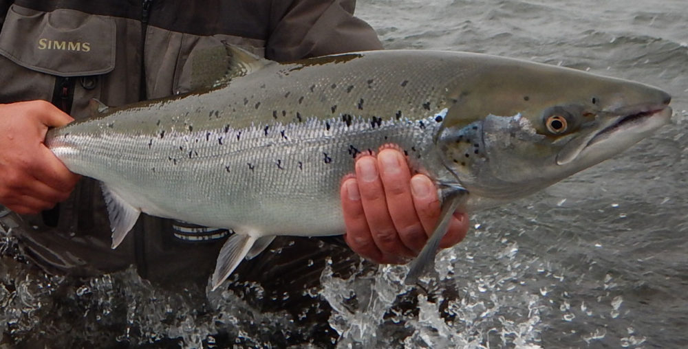 Salmon fishing in Iceland - West Ranga