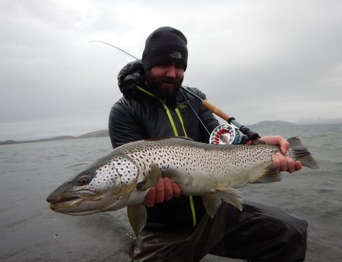 Brown Trout Fishing in Iceland – Trophy Trout Fishing at ION area