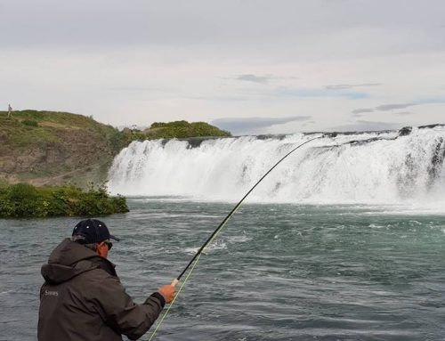 Fishing and Sightseeing in Iceland