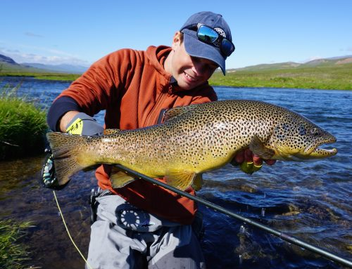 Svarta River In Iceland – Great Brown Trout River