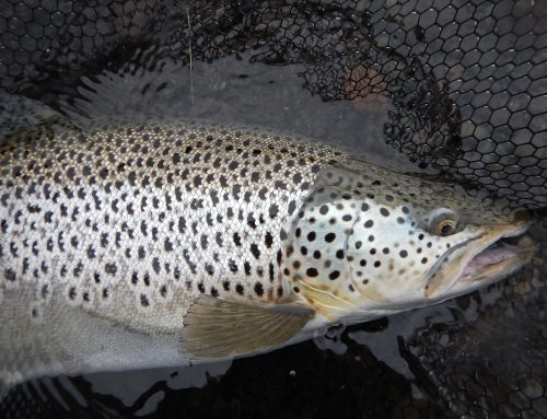 Fishing in lakes in Iceland in 2020
